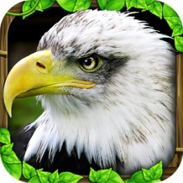 Eagle Simulator 1.0 for Android +2.0.1