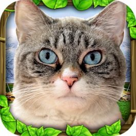 Stray Cat Simulator 1.0.4 for Android +2.3